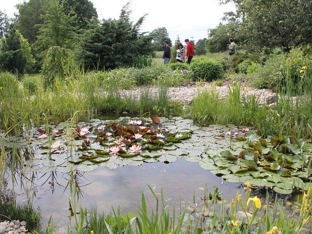 Netypická zahrada. Arboretum v Třešti bylo vytvořeno v roce 2008 proto, aby se s v něm mohli učit studenti zahradnických oborů místní střední školy. Dominantou zahrady je jezírko s rybičkami.