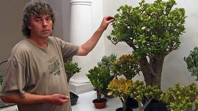 Návštěvníci Muzea Vysočiny vJihlavě si budou moci prohlédnout výstavu exotických rostlin.