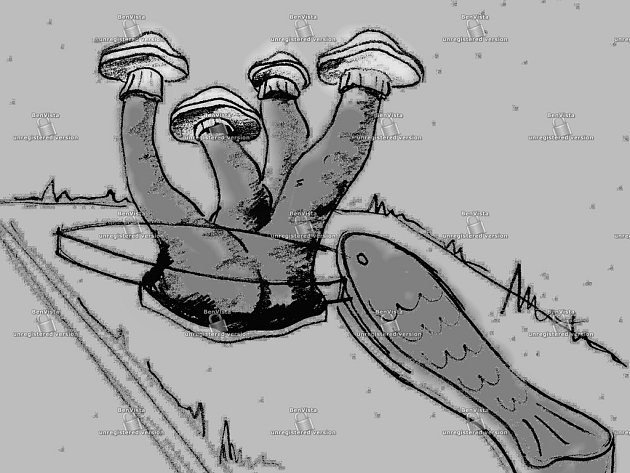 Mochomůrky bílé a lavička ve tvaru rybičky bude stát v Jezdovicích jako památka na Magora. Reprofoto.