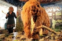Nejstarší historie bude v jihlavském muzeu zastoupena i prehistorickým chobotnatcem.