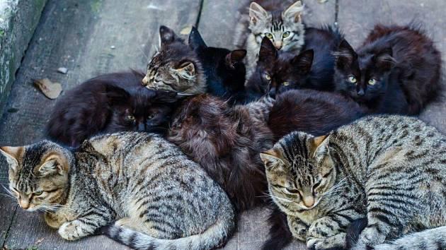 Spolek Feliti club kastruje toulavé kočky a tím chrání volně žijící zvířata, jejichž stavy se dramaticky snižují