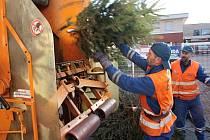 Odložené vánoční stromky putovaly do sběrného vozu.