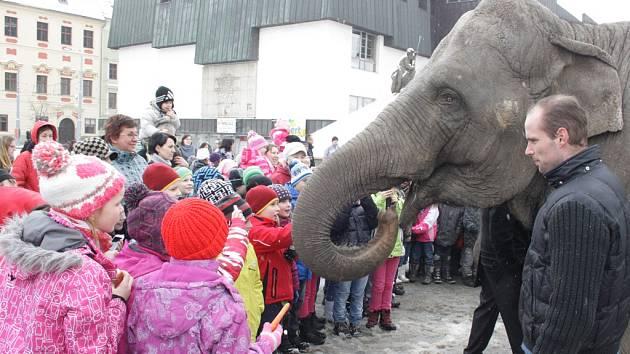 Sloni se ve středu procházeli v centru Jihlavy, kde je děti z mateřských škol krmily jablky, suchými rohlíky a dalším ovocem.