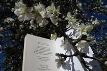 Sbírka básní