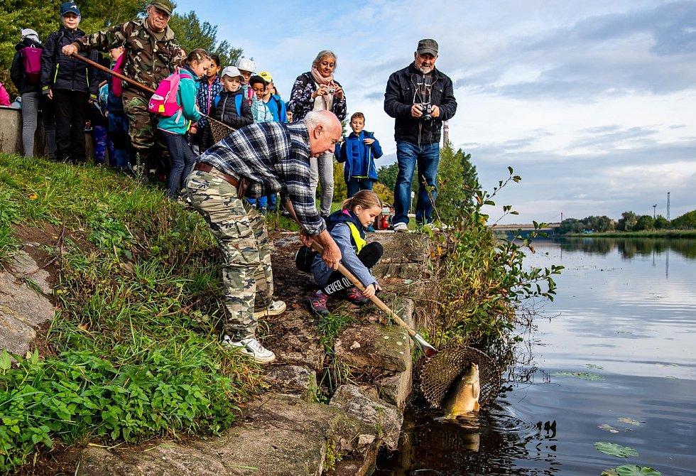 Úhoř je oblíbená ryba nejen rybářů.