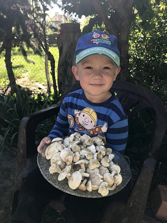 Pokrmem z čirůvky májovky nepohrdne žádný houbový gurmán, tato houba patří totiž k tomu nejlepšímu, co jarní příroda nabízí.