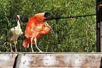 Do venkovní voliéry se vrátili pestrobarevní ptáci.