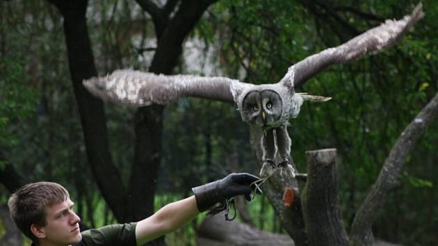 Ukázka výcviku dravců a sov v jihlavské zoo