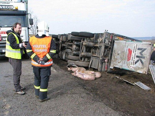 Mezi Zhoří a obcí Jamné na Jihlavsku havaroval v úterý ráno kamión, který převážel živá prasata.