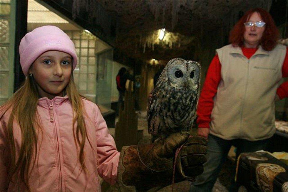 Při sobotním Dni sov a dravců v jihlavské Zoo s návštěvníky v pavilonu šelem rychle spřátelily a nechaly se i pohladit.