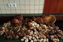Petra Musilová z Dobronína si vyšla v pátek do lesa na houby a vrátila se po dvou hodinách s pořádným úlovkem. Kromě jiného našla více než 80 pravých hříbků.