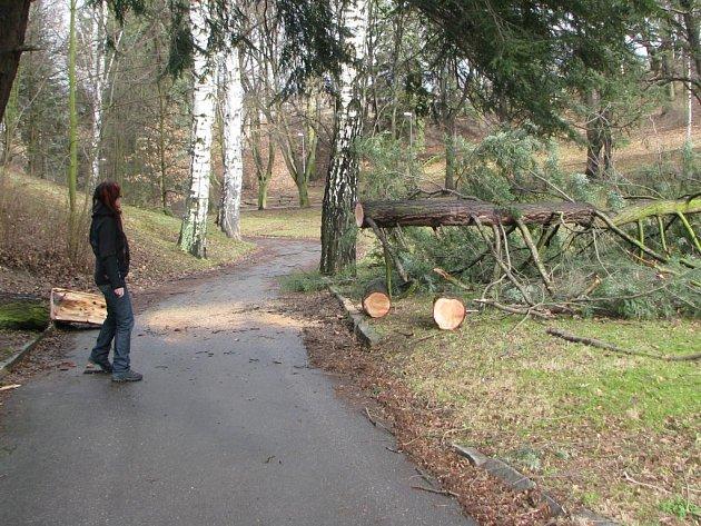 Zničený strom v parku Keťásek