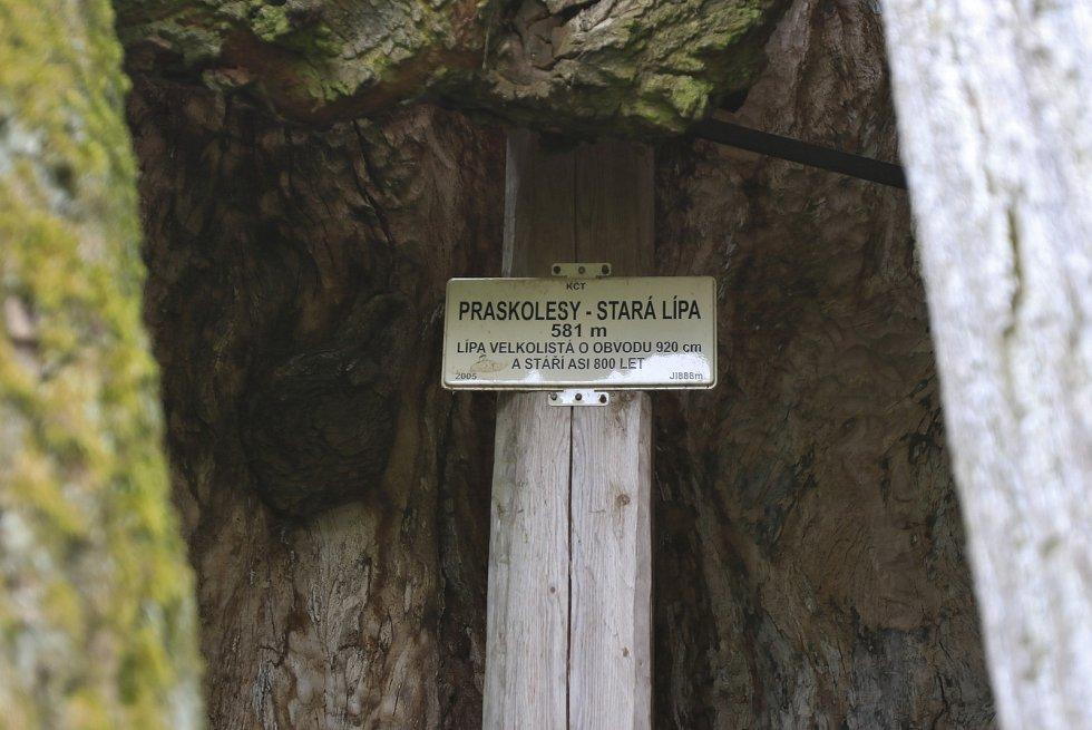 Památná lípa v Praskolesích.