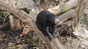 Slunečné dny v jihlavské zoo