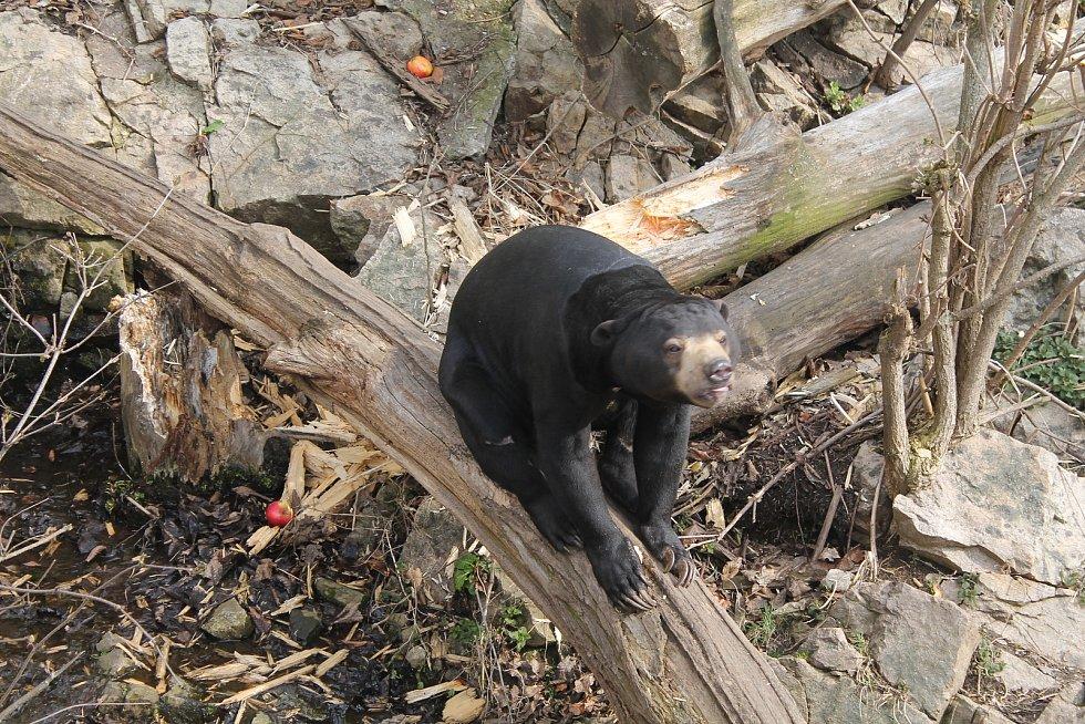 Krmení medvědů malajských je velkým lákadlem, nejmladší návštěvníky ale zajímají i jiná zvířata a stejně tak i dětské hřiště.