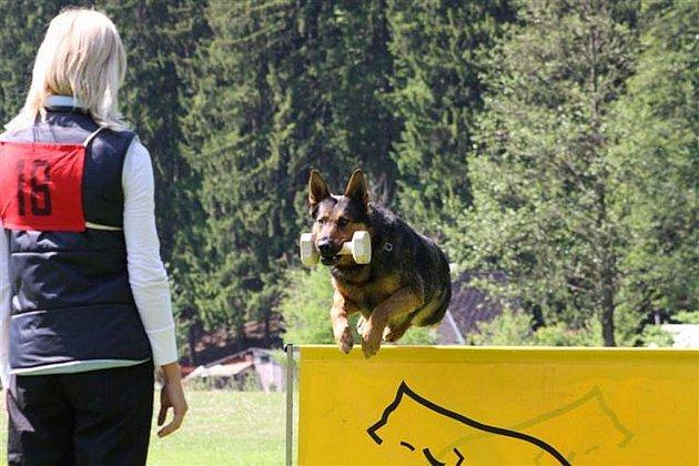 Nominační kynologický závod psů služebních plemen na cvičišti v Jihlavě–Heleníně.