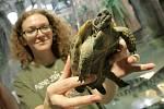 V novém pavilonu je i několik želviček.