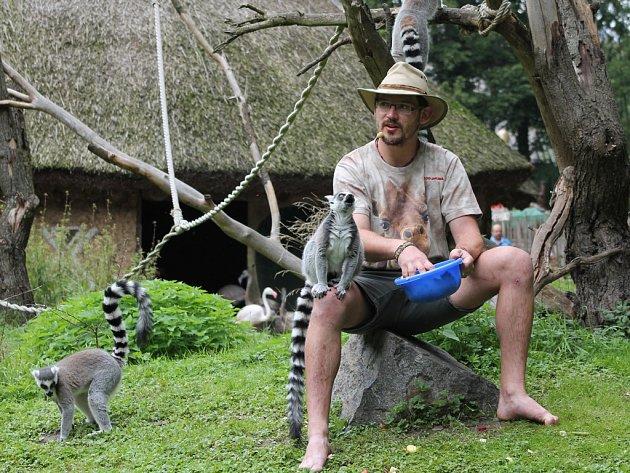 O životě zvířat dokáže Martin Maláč hovořit zasvěceně dlouhé minuty. Při komentovaném krmení lemurů se od něj návštěvníci dozví zajímavé informace o životě těchto zvířat. I když se této činnosti zprvu bál, nyní ho to velice baví.