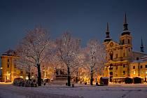 V zimě jsou ozdobou náměstí, v létě poskytují cenný stín. Dvě lípy ale musí jít k zemi.