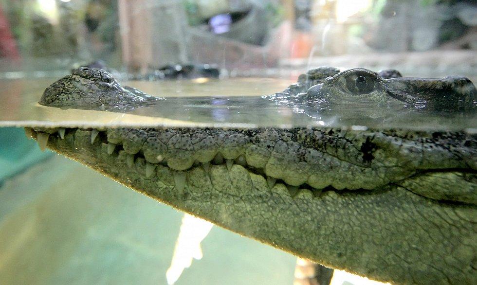 Krokodýlí obydlí.