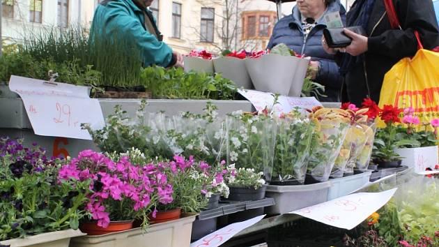 Zelenina a květiny