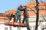 Kácení na Masarykově náměstí v Jihlavě.