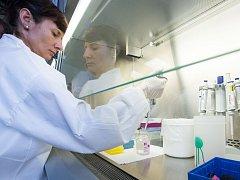 Laborantka v jihlavské Národní referenční laboratoři k odhalení afrického moru prasat.