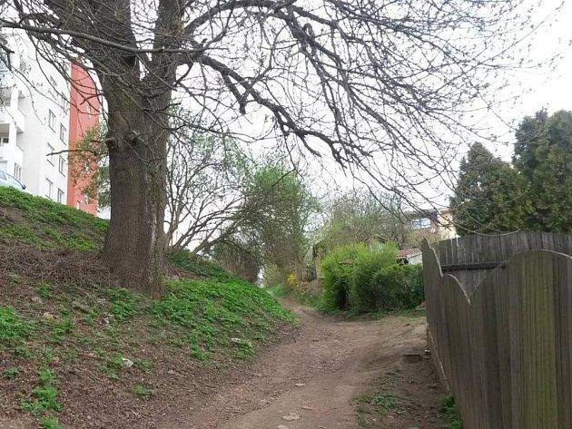 Od začátku dubna se rozrostl registr památných stromů o Fejtův jasan.