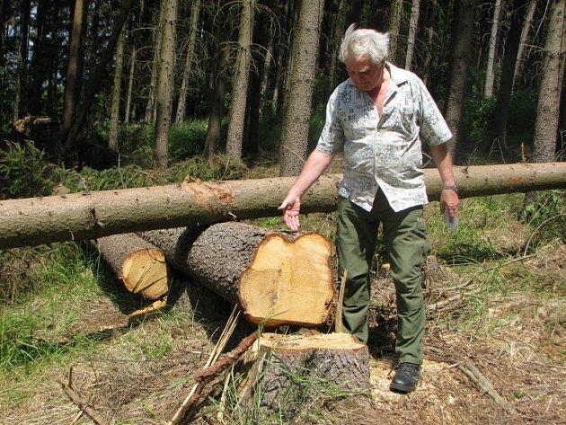 Stromy na okraji lesa padly kvůli elektřině.