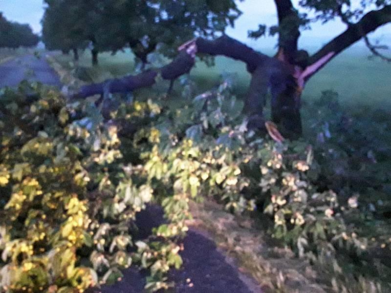 Hasiči opět nejčastěji odstraňovali stromy a větve, které padly na komunikace a bránily tak plynulému provozu.