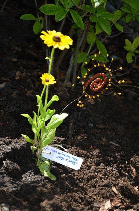 Sázení slunečnic v Jihlavě