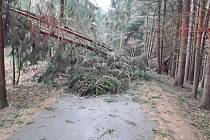 Nejčastěji hasiči zasahovali u spadených stromů.