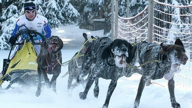 Závody psích spřežení (mushing) ve Třech Studních na Žďársku se staly hlavním bodem víkendu nejen pro devadesátku startujících, ale také pro stovky diváků u trati