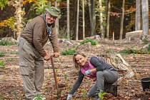 Lidé si budou moci zasadit strom na Dni pro obnovu lesa u Řásné pod Javořicí.