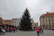 Vánoční strom na Masarykově náměstí v Jihlavě.