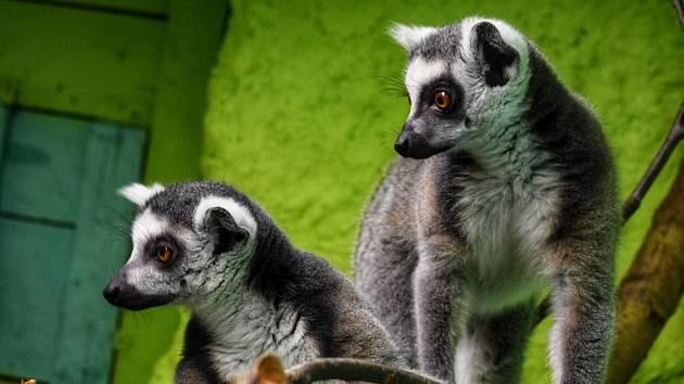 Tento víkend se návštěvníci mohou vydat také do zookoutku v Nové Říši.