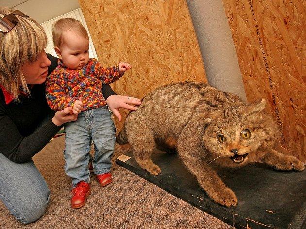 """Nová výstava v Muzeu Vysočiny v Jihlavě s názvem """"Rozumíme zvířatům?"""" přiblíží návštěvníkům život zvířat, jejich chování, ale také nabídne hry, testy nebo živá zvířata v teráriích."""