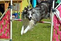 Kvůli covidu a zákazu shromažďování se odborný výcvik psů na cvičištích nekoná.