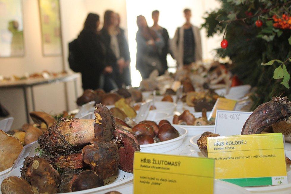 Výstava hub v Muzeu Vysočiny Jihlava.