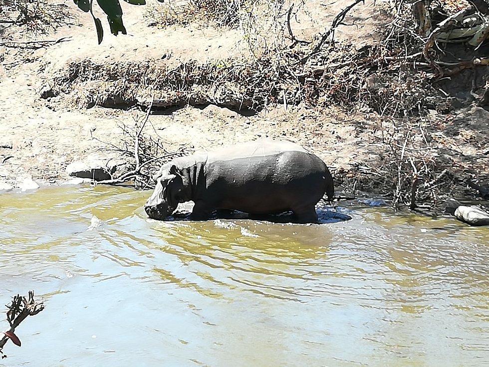 Krugerův park.