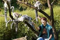 Ostrov Lemurů patří v jihlavské ZOO mezi nejoblíbenější expozice.