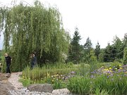 Arboretum v třešti.