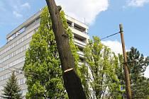 Domov strakapoudů. Riziko hnízdění ptáků ve stromech v jarním období je velké, proto se nemá kácet.