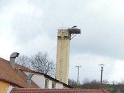 Hnízdo s čápi v centru Brtnice obdivuje mnoho kolemjdoucích. Foto: archiv město Brtnice