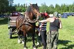 I koně se staly atrakcí.