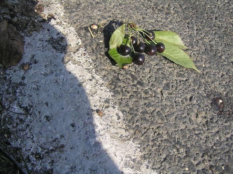 I třešně u silnic mají majitele. Ilustrační foto