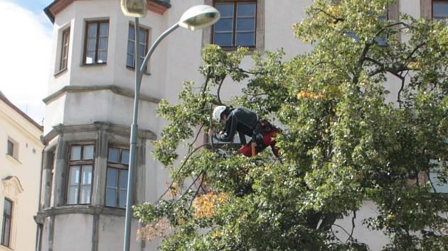 Arboristé pomáhali v minulých letech například stromům na Masarykově náměstí. Ilustrační foto.