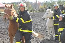 Koně, kteří v pátek ráno utekli na dálnici, byli po zásahu vráceni chovatelce z Rybného. Ilustrační foto.