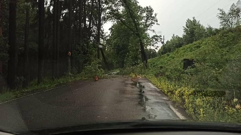 Spadlý strom směrem na Josefodol - červenec 2021.