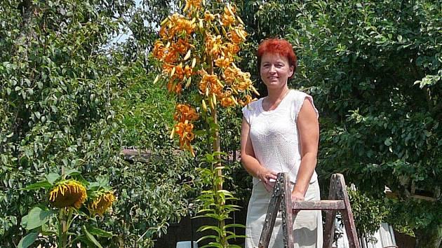 Nejvyšší lilie v republice, která je čerstvě zanesená v databance rekordů, měří 278 centimetrů.